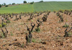 ワインの土壌①