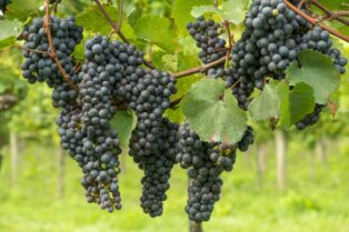 ワインの土壌③