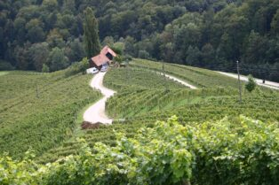 ワイン産地②