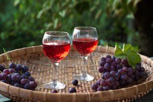 オーガニックワイン⑤